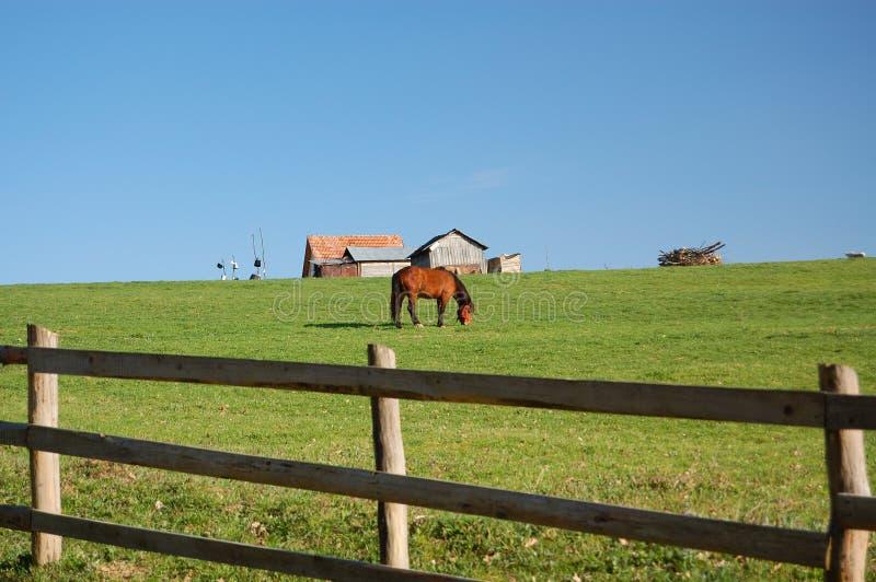Caballo en la granja en Transilvania fotos de archivo