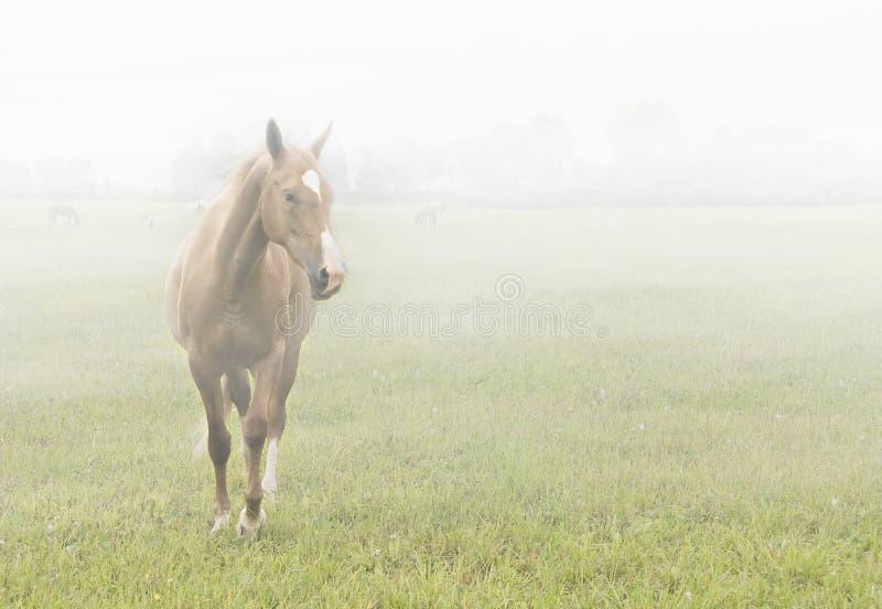 Caballo en la niebla fotos de archivo