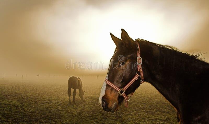 Caballo en la niebla foto de archivo