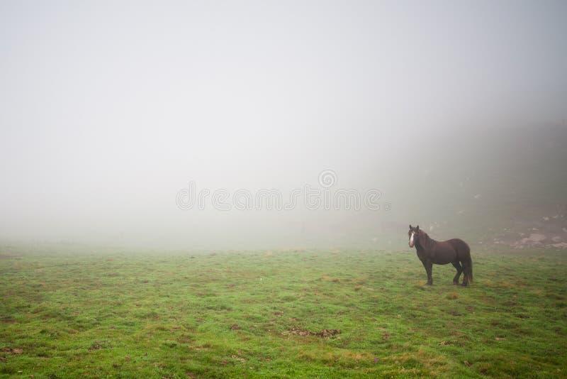Caballo en la niebla imagen de archivo