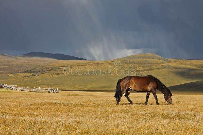 Caballo en la puesta del sol, Altai fotos de archivo
