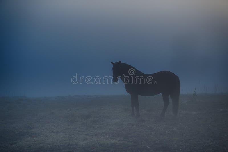 Caballo en niebla de la mañana foto de archivo