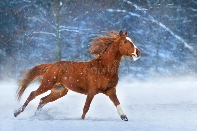 Caballo en nieve fotos de archivo libres de regalías