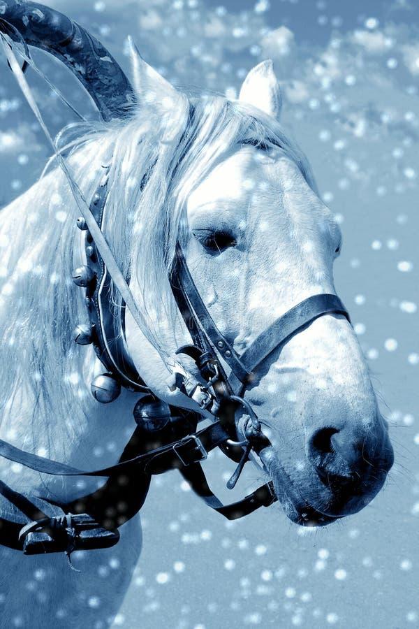 Caballo en nieve imagen de archivo