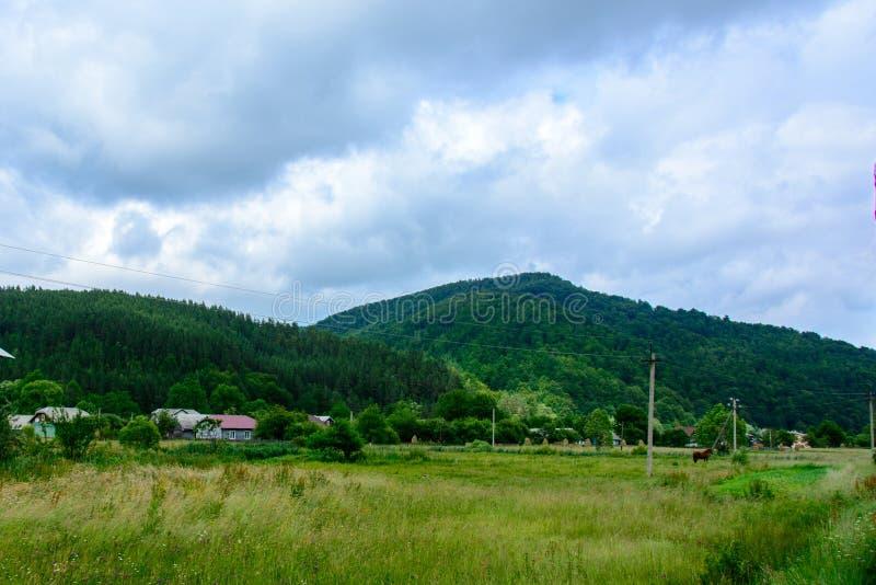 Caballo hermoso en el fondo de montañas cárpatas ucranianas foto de archivo libre de regalías