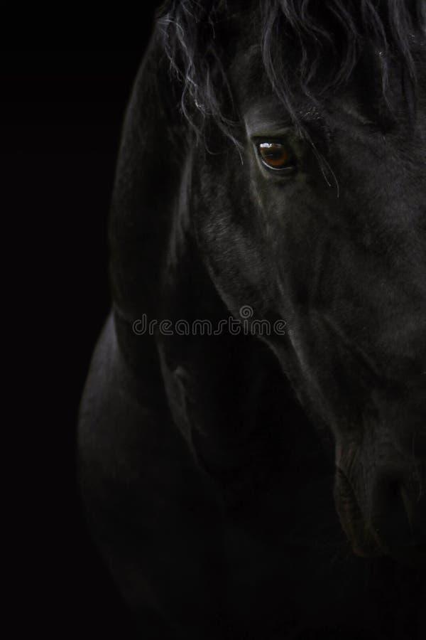 Caballo negro fotos de archivo