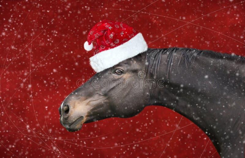 Caballo negro con el sombrero de la Navidad en las nevadas rojas del fondo imagen de archivo libre de regalías
