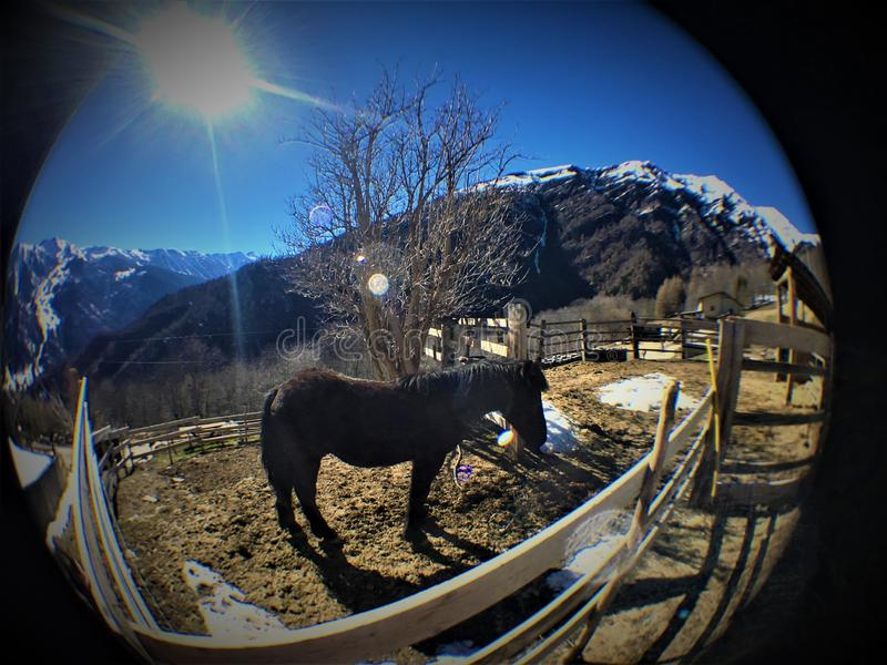 Caballo, nieve, montaña, luminiscencia y luz del sol fotos de archivo