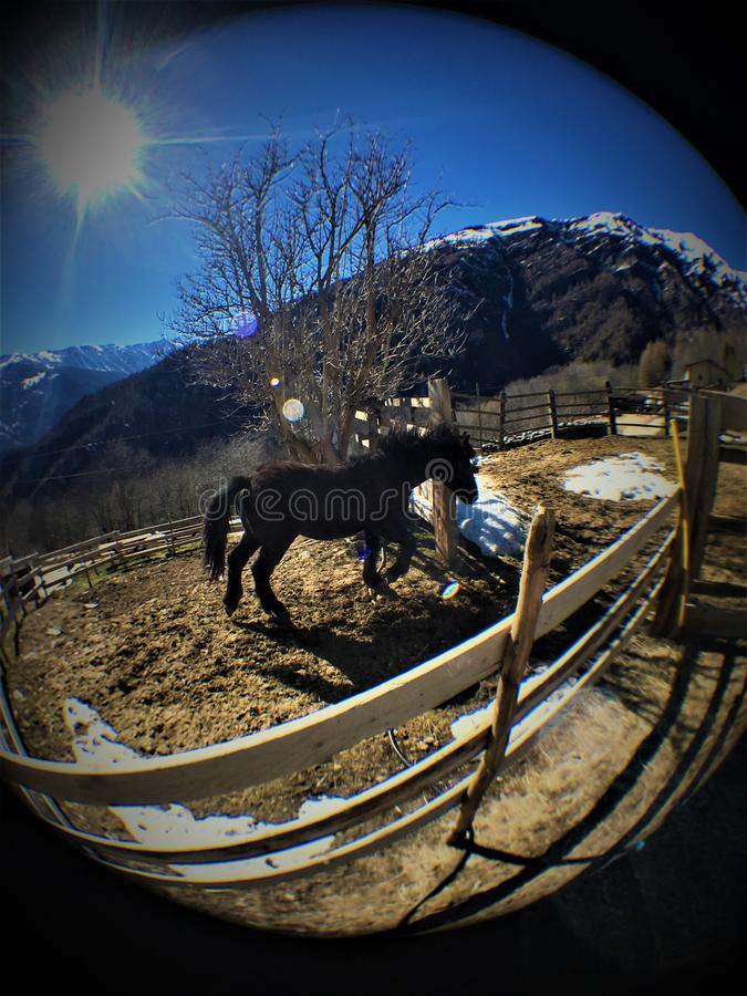 Caballo, nieve, montaña, luminiscencia y luz del sol de funcionamiento fotos de archivo libres de regalías