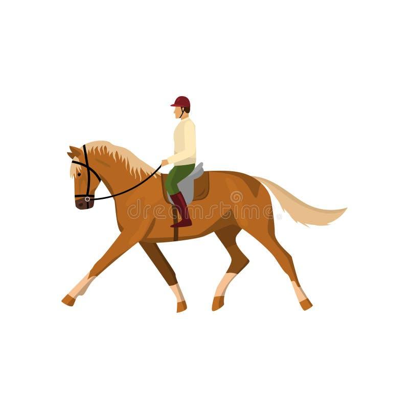 Caballo que activa del marrón del montar a caballo del hombre aislado contra el fondo blanco libre illustration