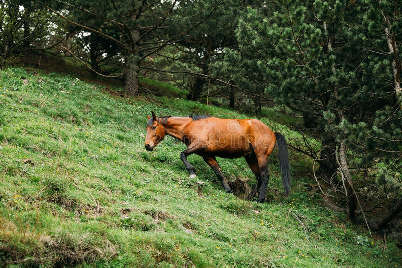 Caballo que come la hierba en pasto de la primavera Caballo que pasta en un M verde imagen de archivo