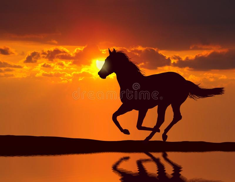 Caballo que corre durante puesta del sol ilustración del vector