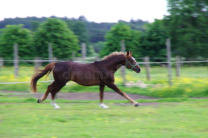 Caballo que corre en prado imagen de archivo libre de regalías