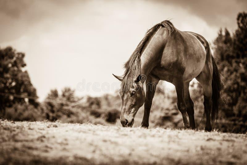 Caballo salvaje de Brown en campo idílico del prado fotos de archivo