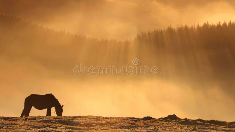 Caballo solitario en la salida del sol de oro imagenes de archivo
