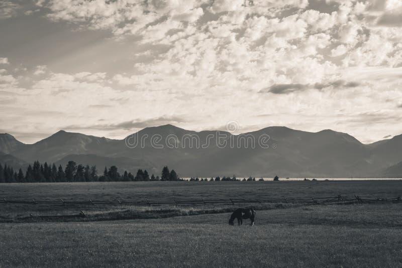 Caballo solitario en un campo imagenes de archivo