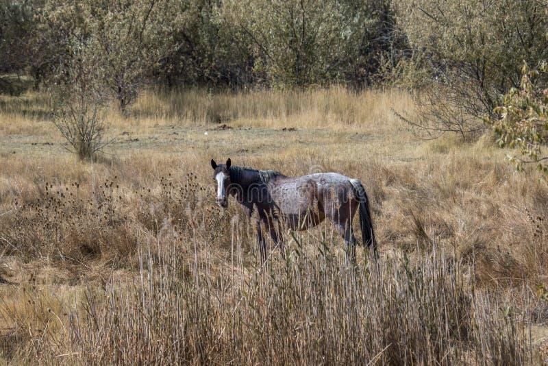 Caballo solitario en un campo en otoño imagenes de archivo