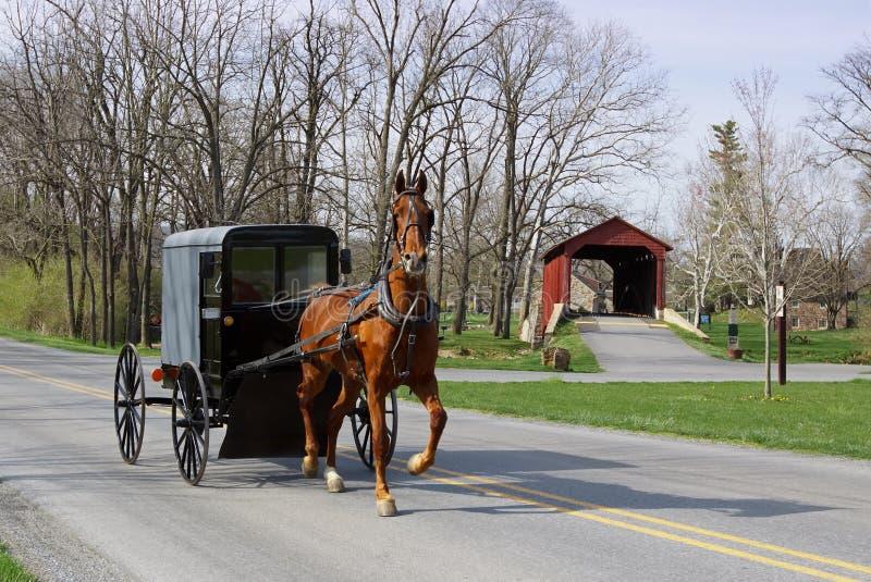 Caballo y carro de Amish foto de archivo