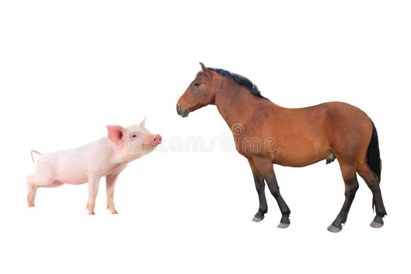 Caballo y cerdo fotografía de archivo libre de regalías