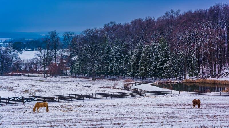 Caballo y charca en una granja en el condado de York rural, Pennsylvania fotos de archivo