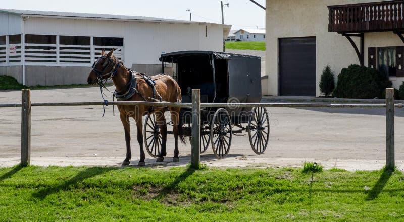 Caballo y cochecillo de Amish fotos de archivo