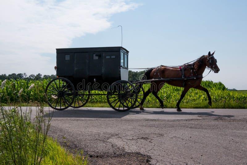 Caballo y cochecillo de Amish foto de archivo