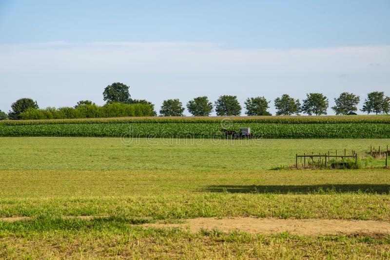 Caballo y cochecillo de Amish que dirigen a casa fotografía de archivo