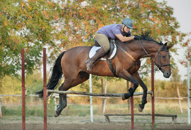 Caballo y salto de montar a caballo de la muchacha foto de archivo libre de regalías
