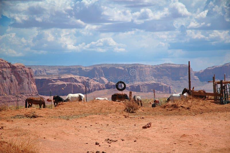 Caballos a alquilar en el valle del monumento, parque nacional en los E.E.U.U. fotografía de archivo