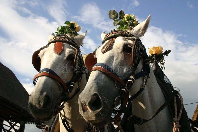 Caballos antiguos con las rosas imágenes de archivo libres de regalías