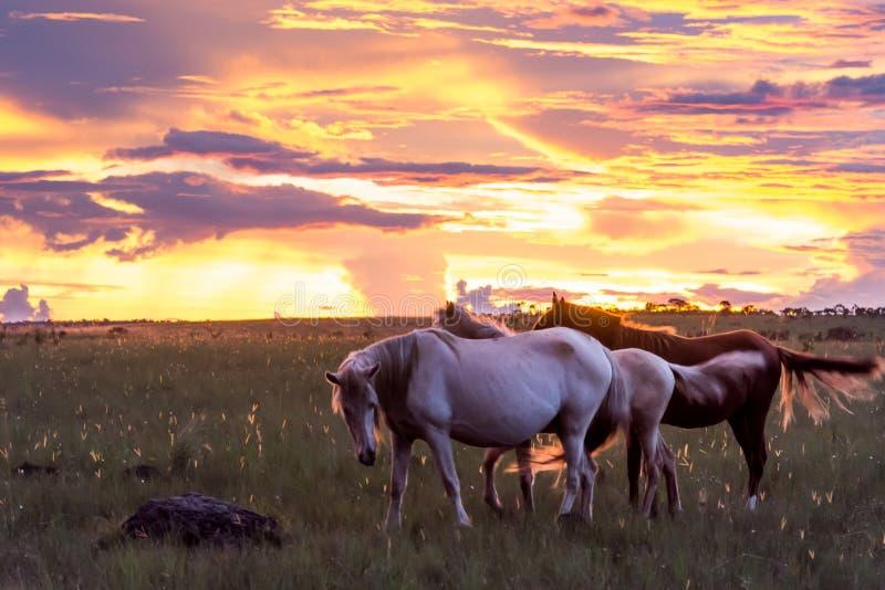 Caballos bajo puesta del sol en DOS Veadeiros de Chapada foto de archivo