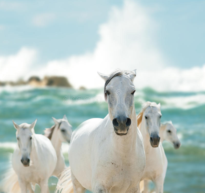 Caballos blancos en el mar imagenes de archivo