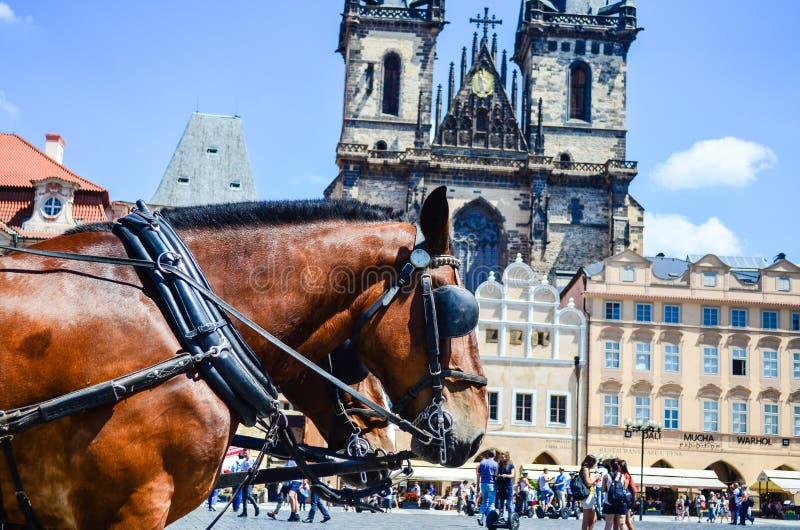 caballos contra la iglesia de nuestra señora antes de Tyn fotografía de archivo