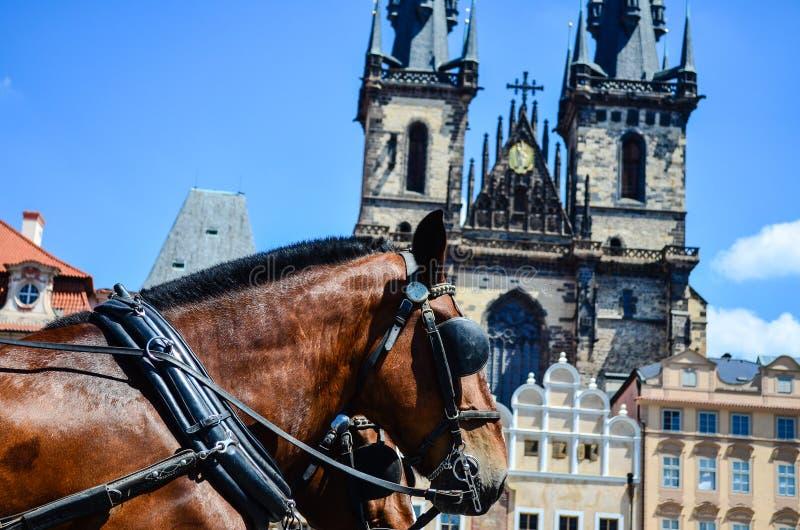 caballos contra la iglesia de nuestra señora antes de Tyn fotos de archivo