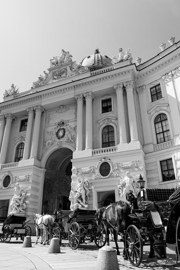 Caballos de carro, Viena fotografía de archivo