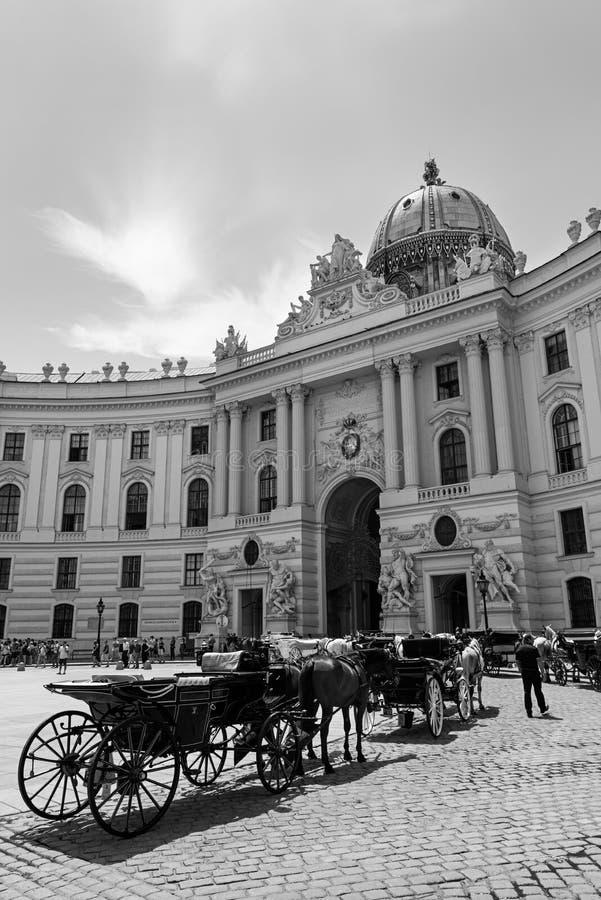 Caballos de carro, Viena imagen de archivo