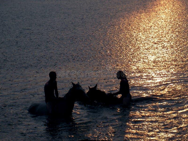Caballos de la natación foto de archivo