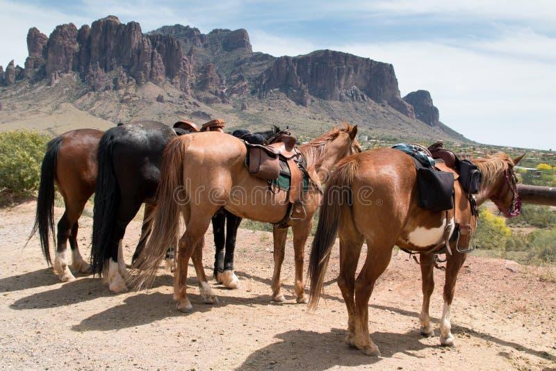 Caballos de montar a caballo en el país fotografía de archivo libre de regalías