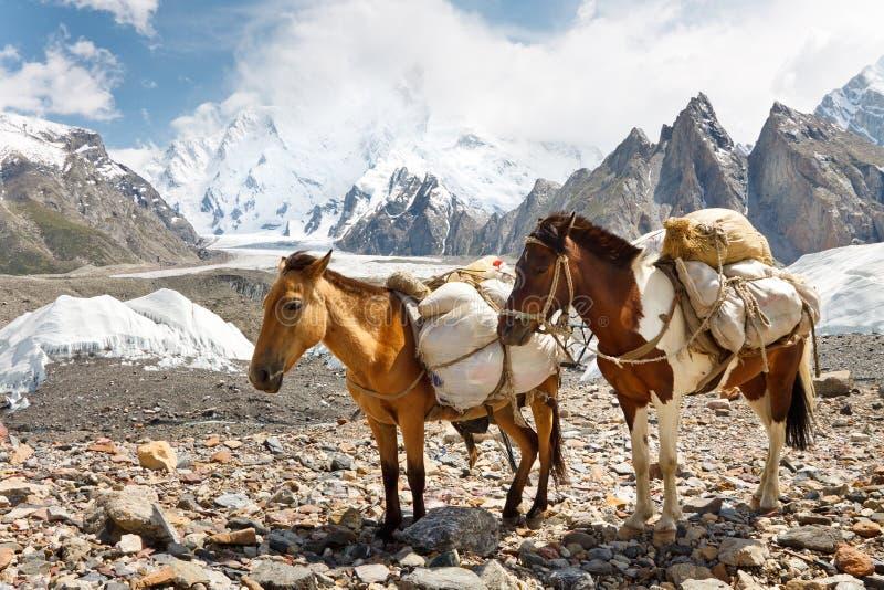 Caballos de paquete en el Karakorum, Paquistán imágenes de archivo libres de regalías
