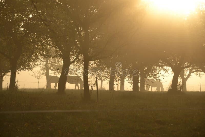 Caballos debajo de árboles foto de archivo