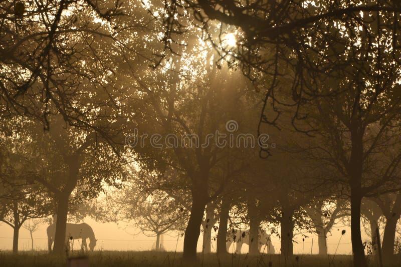 Caballos debajo de árboles fotografía de archivo libre de regalías