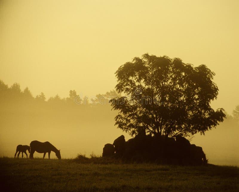 Caballos en el amanecer imagen de archivo libre de regalías