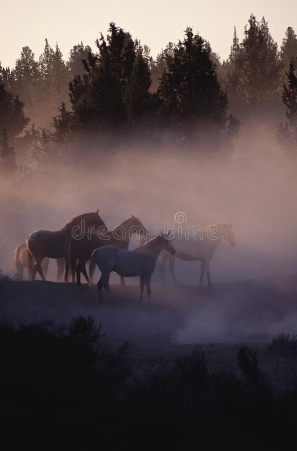 Caballos en el bosque imágenes de archivo libres de regalías