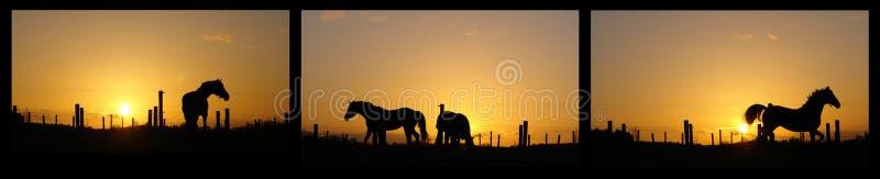 Caballos en el horizonte puesto a contraluz por puesta del sol imagen de archivo libre de regalías