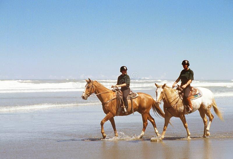 Caballos en la playa de la resaca imagenes de archivo