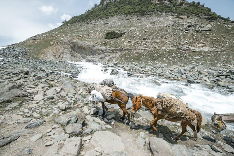 Download Caballos en las montañas foto de archivo. Imagen de motivación - 42441184