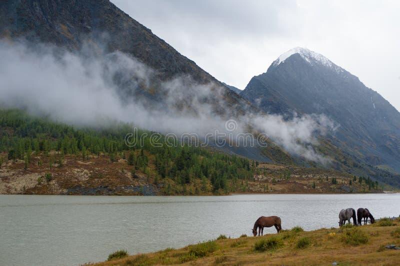 Caballos en las montañas cerca del lago foto de archivo libre de regalías