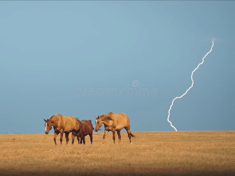 Caballos en los caballos de steppe Una pequeña manada de caballos en un campo fotografía de archivo libre de regalías