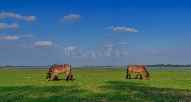 Caballos en paisaje foto de archivo libre de regalías