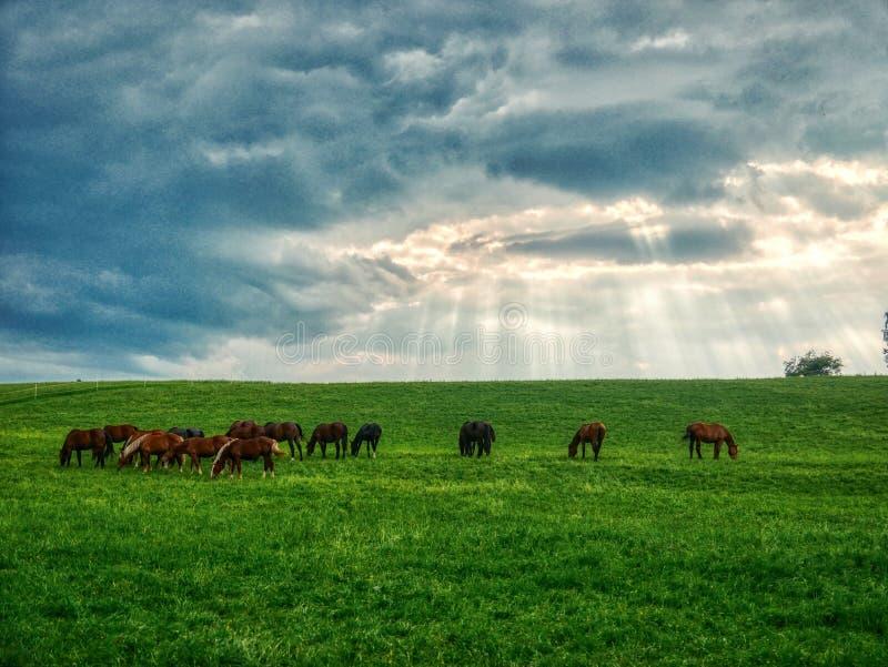 Caballos en un día nublado del campo de la foto verde de HDR foto de archivo libre de regalías